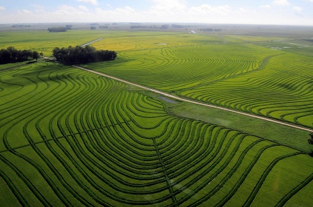 Rice crops in Uruguay.