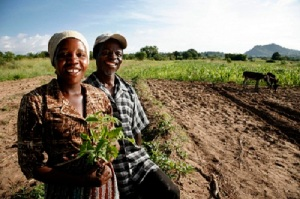 La mitad de todos los agricultores del mundo en desarrollo son mujeres, y ellas puedan cultivar un 30% más de alimentos si tienen acceso a los mismos recursos que los hombres. Foto: David Brazier / IWMI