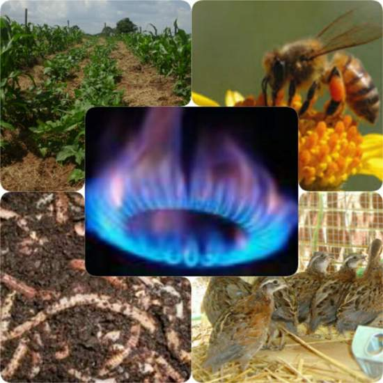 energised farming