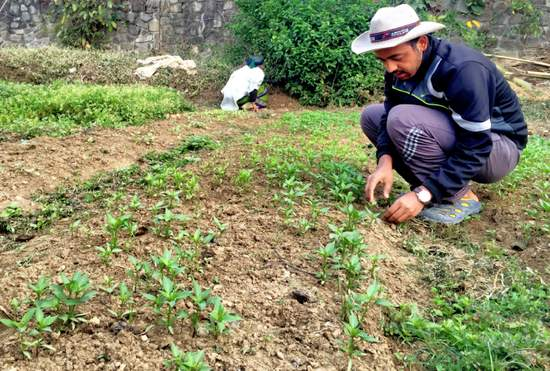 "YAP Proposal #56: ""Youth Agriculture Garden"" (Sanjay Kafle, Nepal"