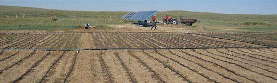 Agri-solar