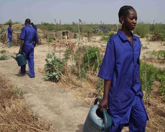 -Bintou Traoré, un exemple encourageant offert par notre ferme école pour donner à la femme la place qu'elle mérite dans l'agriculture familiale au Mali
