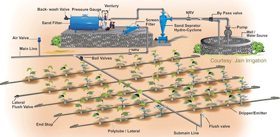Commercial Drip Irrigation