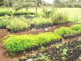 Example of a tree nursery