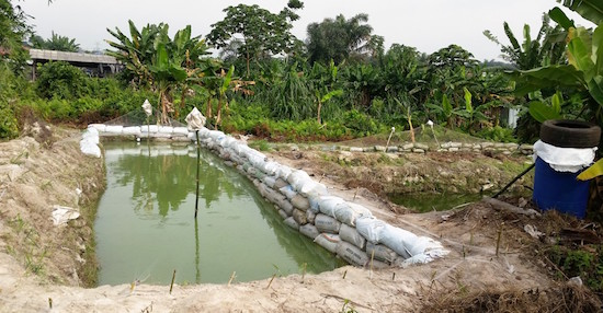 Fish ponds on the farm