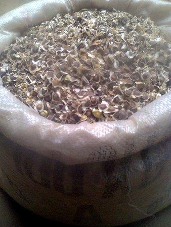 "YAP Proposal #207: ""Moringa Oleifera Mega Farm Project"
