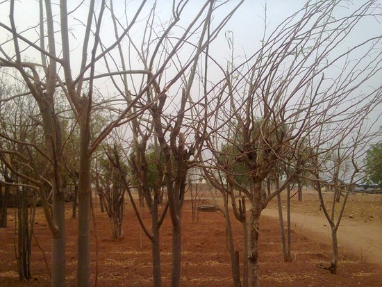 My small moringa farm