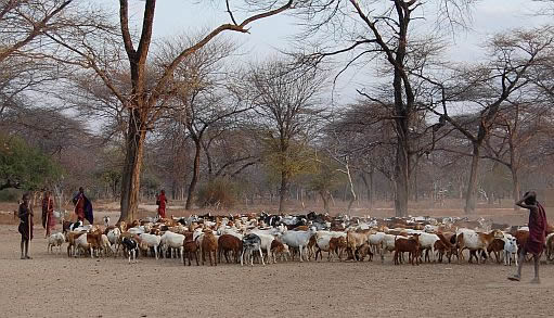Pastoralists in degraded lands