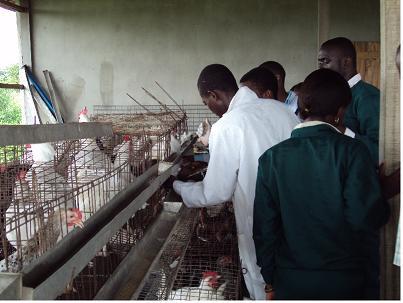 poultrybreeding