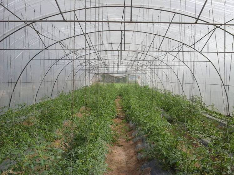 view of tunnel farming