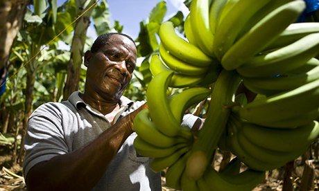 Banana-farmer-009