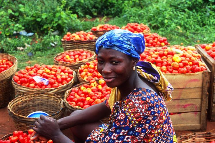 12 November 2004, Ghana - FAO project beneficiaries sorting tomatoes for sale at a local market. FAO Project: UTF/GHA/027/GHA - Special Programme for Food Security Phase I. The Objectives are to increase smallholders' productivity and improve household food security at selected sites representing the different farming/irrigation systems through sustainable use of improved agriculture technologies; Develop management capacities of farmers and farmers associations; Demonstrate, test and adjust a process for assisting farmers to benefit from improved technology on a sustainable basis.