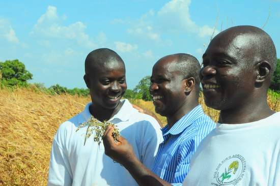 A farmer discuss his new harvest with a researcher and extension agent (Ghana)