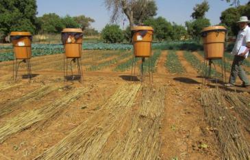 aa-IMG_3307-drip-irrigation-in-Burkina-Faso