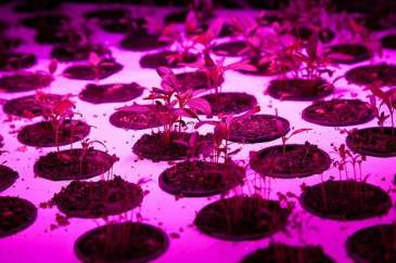 cea-farming