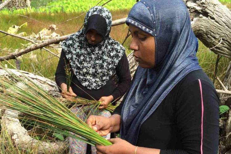 Leena+collecting+reeds+from+the+nearby+marshland.++Aishath+Niyaz+horizontal