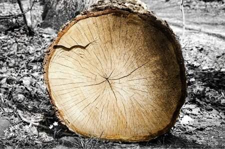 log image