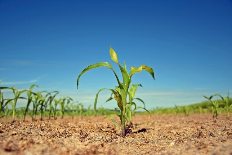plant-2392845_1920