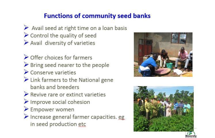 seed banks 1