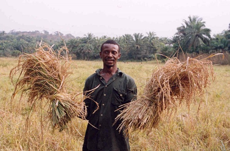 Sierra_Leone_rice_farmer