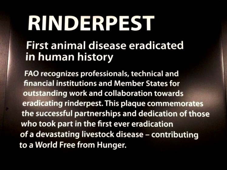 rinderpest2